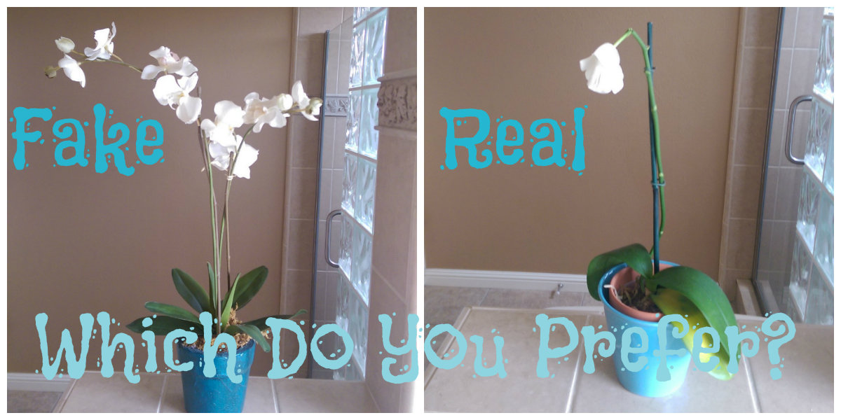 Orchids silk versus real armchairdecoratorblog orchids real fake mightylinksfo